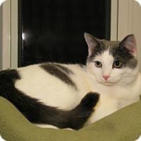 Adopt A Pet :: Attie - Milford, MA