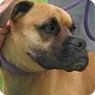 Adopt A Pet :: Rugert
