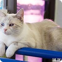 Adopt A Pet :: Lila - Montclair, CA