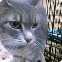 Adopt A Pet :: Raygan - Upland, CA