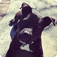 Adopt A Pet :: Thomas - Santa Monica, CA