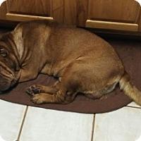Adopt A Pet :: Chucky - Gainesville, FL