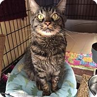 Adopt A Pet :: THOMAS - Brea, CA