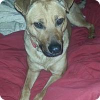 Adopt A Pet :: Paisley - Livonia, MI