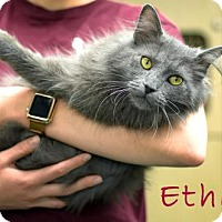 Adopt A Pet :: Ethan - Albuquerque, NM