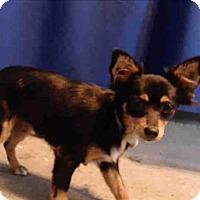 Adopt A Pet :: Mila - Encino, CA
