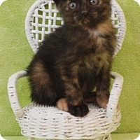 Adopt A Pet :: Savannah - Elkhorn, WI