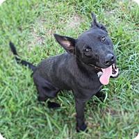 Adopt A Pet :: Reese - Spring, TX