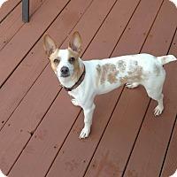 Adopt A Pet :: Tracker - Plainfield, IL