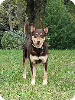 Husky Mix Dog for adoption in Atchison, Kansas - Ava
