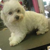 Adopt A Pet :: Tiffany - Moreno Valley, CA