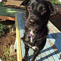 Adopt A Pet :: Sativa - The Dalles, OR