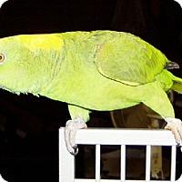 Adopt A Pet :: Kiwi - Mobile, AL