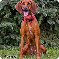 Adopt A Pet :: Annie Oakley - Fremont, MI