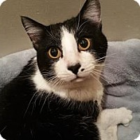 Adopt A Pet :: Orozco - Wichita, KS