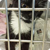 Adopt A Pet :: Phillip - Sauk Rapids, MN