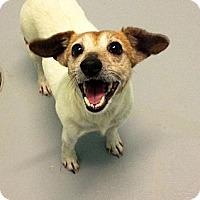 Adopt A Pet :: Aurora - Muskegon, MI