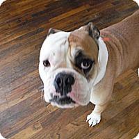 Adopt A Pet :: GRACIE - Atascadero, CA