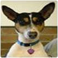 Adopt A Pet :: Lola - Cleveland, OH