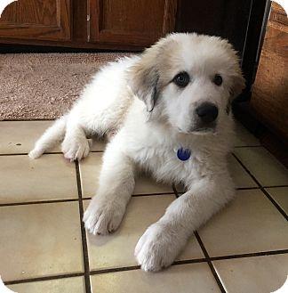 Dogs For Adoption Bloomington Illinois