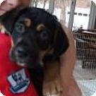 Adopt A Pet :: Anjelica