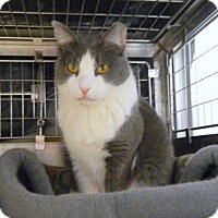 Adopt A Pet :: ASTRID - Cliffside Park, NJ