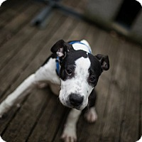 Adopt A Pet :: April - Reisterstown, MD