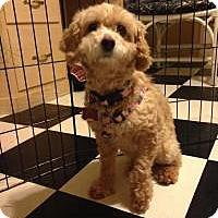 Adopt A Pet :: Brette - Mount Gretna, PA