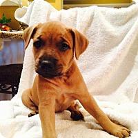 Adopt A Pet :: Madame Mizel - Huntsville, AL