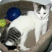 Adopt A Pet :: Kricket - Powell, OH