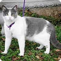 Adopt A Pet :: Scrappy - Dublin, VA