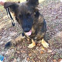Adopt A Pet :: Katie - Daleville, AL