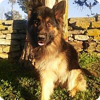 Adopt A Pet :: Zeko - Louisville, KY