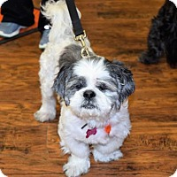 Adopt A Pet :: Coolio - Fairfield, OH