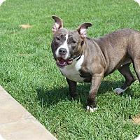 Adopt A Pet :: Lucy - Shrewsbury, NJ