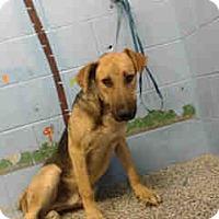 German Shepherd Dog/Shepherd (Unknown Type) Mix Dog for adoption in San Bernardino, California - URGENT ON 10/4  San Bernardino
