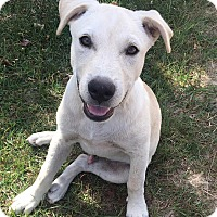 Adopt A Pet :: Eli - Forked River, NJ