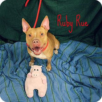 Pit Bull Terrier Mix Dog for adoption in Melbourne, Kentucky - Ruby Rue
