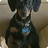 Adopt A Pet :: ARNIE - Barium Springs, NC