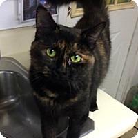Adopt A Pet :: Trouble - Milton, MA