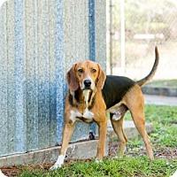 Adopt A Pet :: Griffey - Elkton, FL