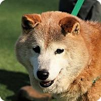 Adopt A Pet :: Tokyo - Asheville, NC