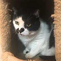 Adopt A Pet :: Spot - Saylorsburg, PA