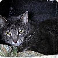 Adopt A Pet :: Popa - Gaithersburg, MD