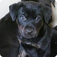 Adopt A Pet :: peter - Cleveland, OH