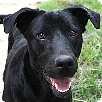 Adopt A Pet :: PADEN (from Silverado) - Austin, TX