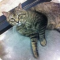 Adopt A Pet :: Blake - Pittstown, NJ
