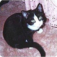 Adopt A Pet :: Toby - Kitten #1 - Warren, OH