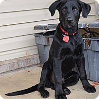 Adopt A Pet :: *Butler - PENDING - Westport, CT