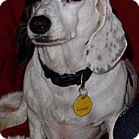 Adopt A Pet :: Max - Vista, CA